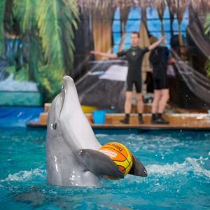 Дельфинарии, океанариумы Волосово