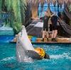 Дельфинарии, океанариумы в Волосово