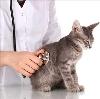 Ветеринарные клиники в Волосово